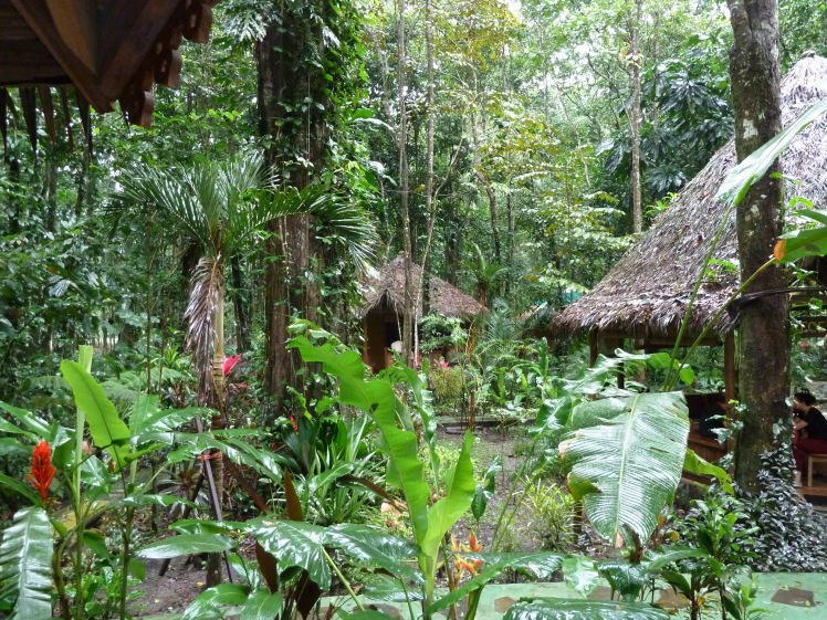 Cabins at Korrigan Lodge nestled into the jungle.