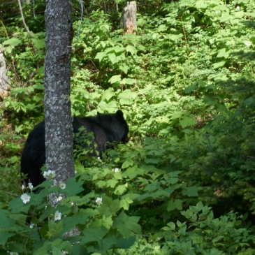 Thankful Mr. Bear decided to leave the trail.